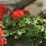 Cómo crear una memoria de la foto de la maceta de flores
