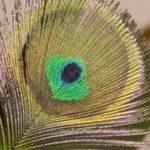 Artesanías para hacer con plumas