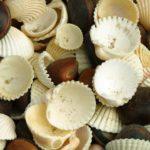 Tipos de conchas marinas que se encuentran en la costa de Nueva Jersey