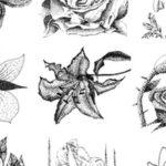 Cómo sombrear y sombrear un dibujo de una flor de rosa