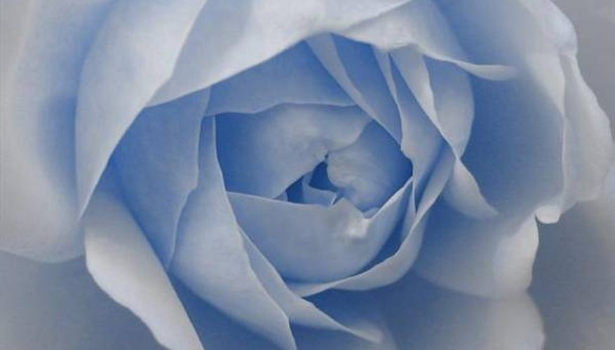 Cómo pintar rosas