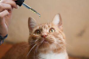 3 razones por las que su gato podría beneficiarse del CBD